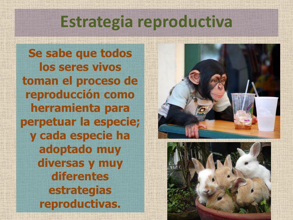 Estrategia reproductiva