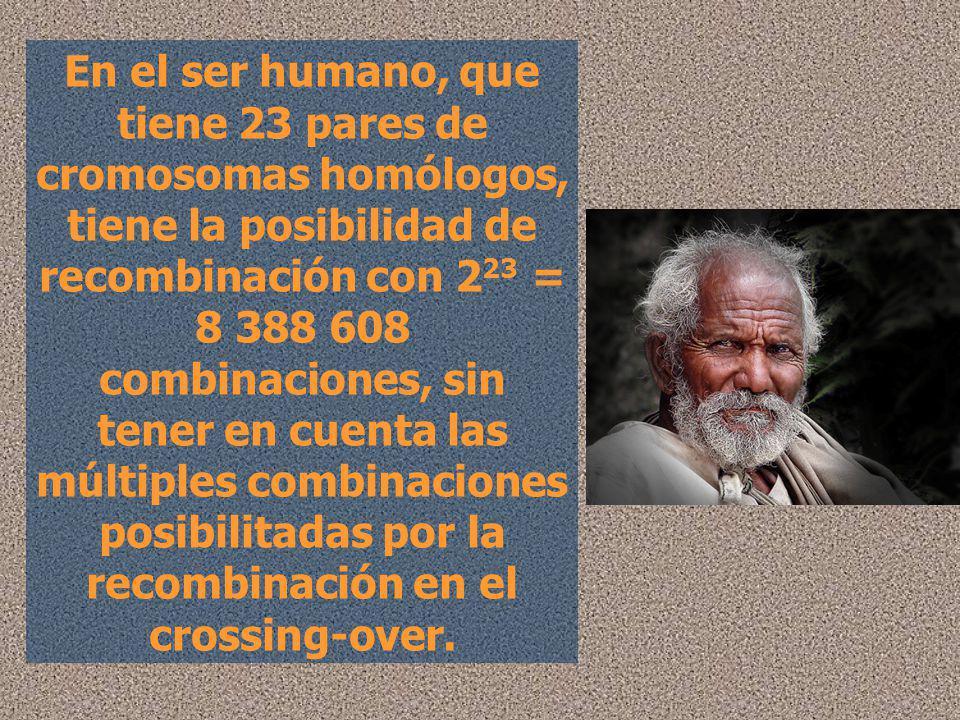 En el ser humano, que tiene 23 pares de cromosomas homólogos, tiene la posibilidad de recombinación con 223 = 8 388 608 combinaciones, sin tener en cuenta las múltiples combinaciones posibilitadas por la recombinación en el crossing-over.