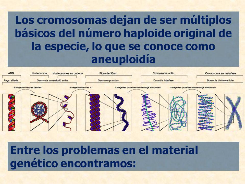 Los cromosomas dejan de ser múltiplos básicos del número haploide original de la especie, lo que se conoce como aneuploidía