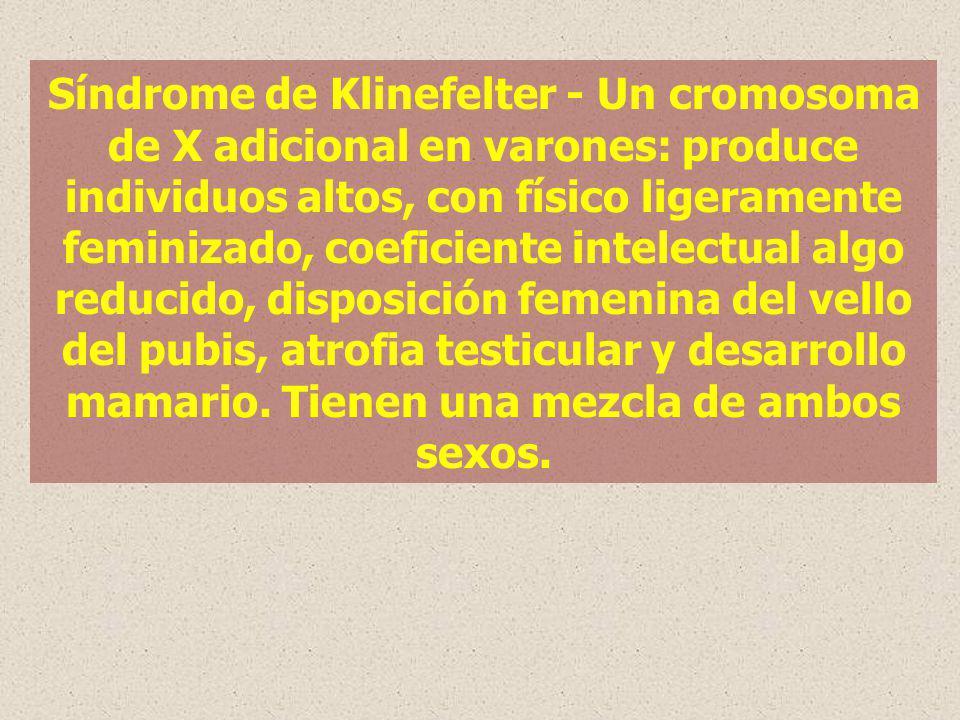 Síndrome de Klinefelter - Un cromosoma de X adicional en varones: produce individuos altos, con físico ligeramente feminizado, coeficiente intelectual algo reducido, disposición femenina del vello del pubis, atrofia testicular y desarrollo mamario.