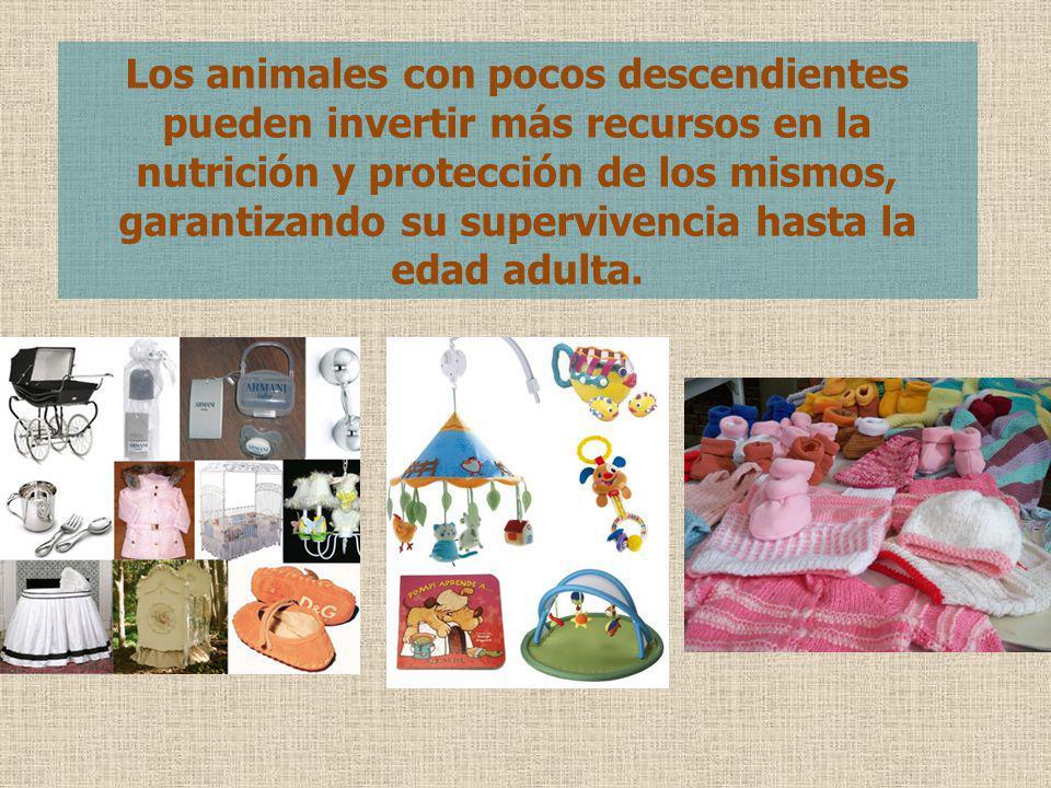 Los animales con pocos descendientes pueden invertir más recursos en la nutrición y protección de los mismos, garantizando su supervivencia hasta la edad adulta.