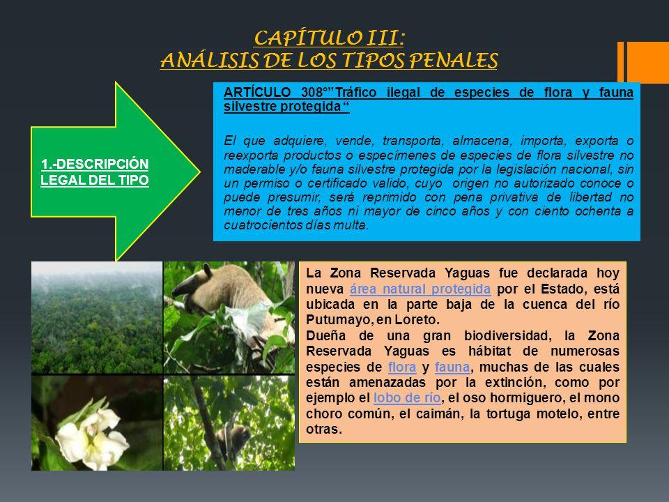 CAPÍTULO III: ANÁLISIS DE LOS TIPOS PENALES