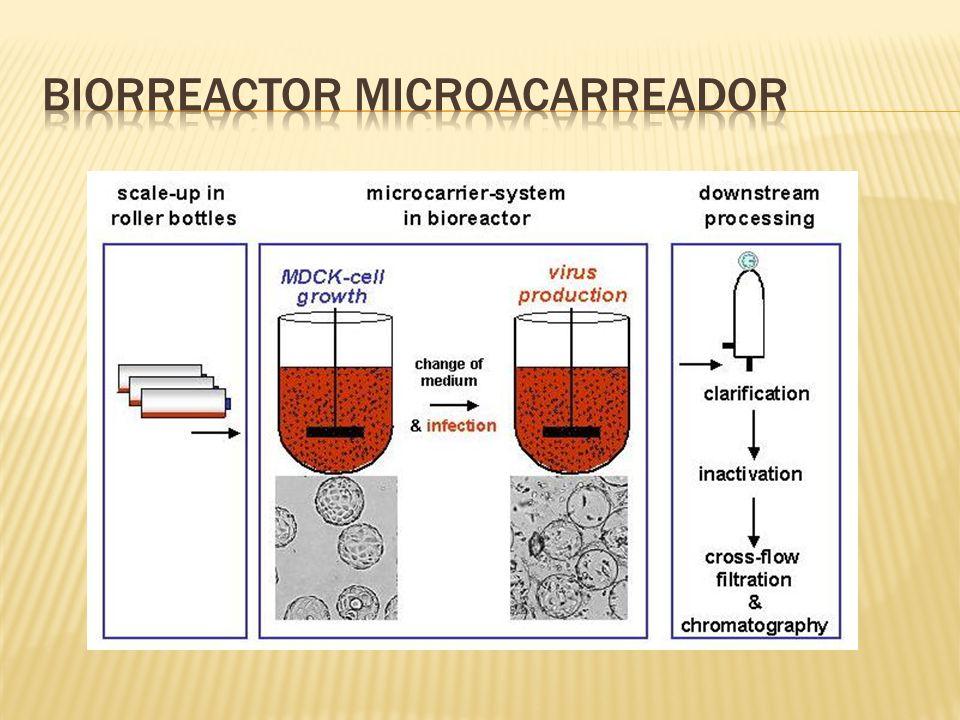 Biorreactor microacarreador