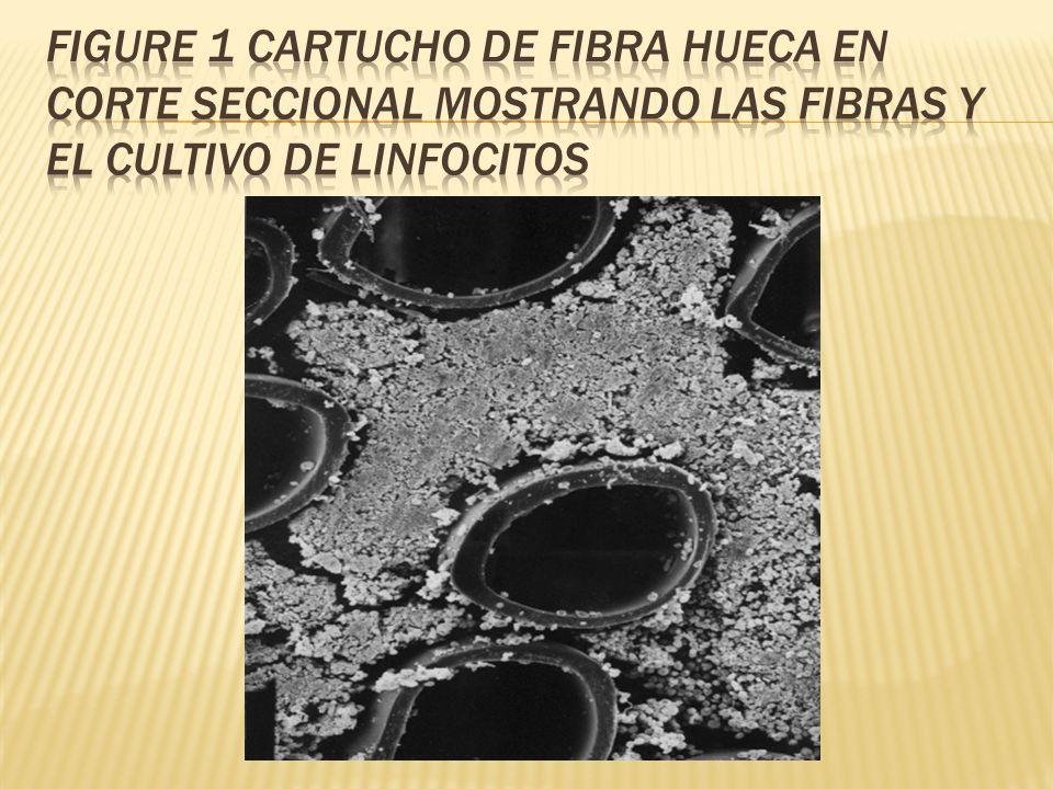 Figure 1 cartucho de fibra hueca en corte seccional mostrando las fibras y el cultivo de linfocitos