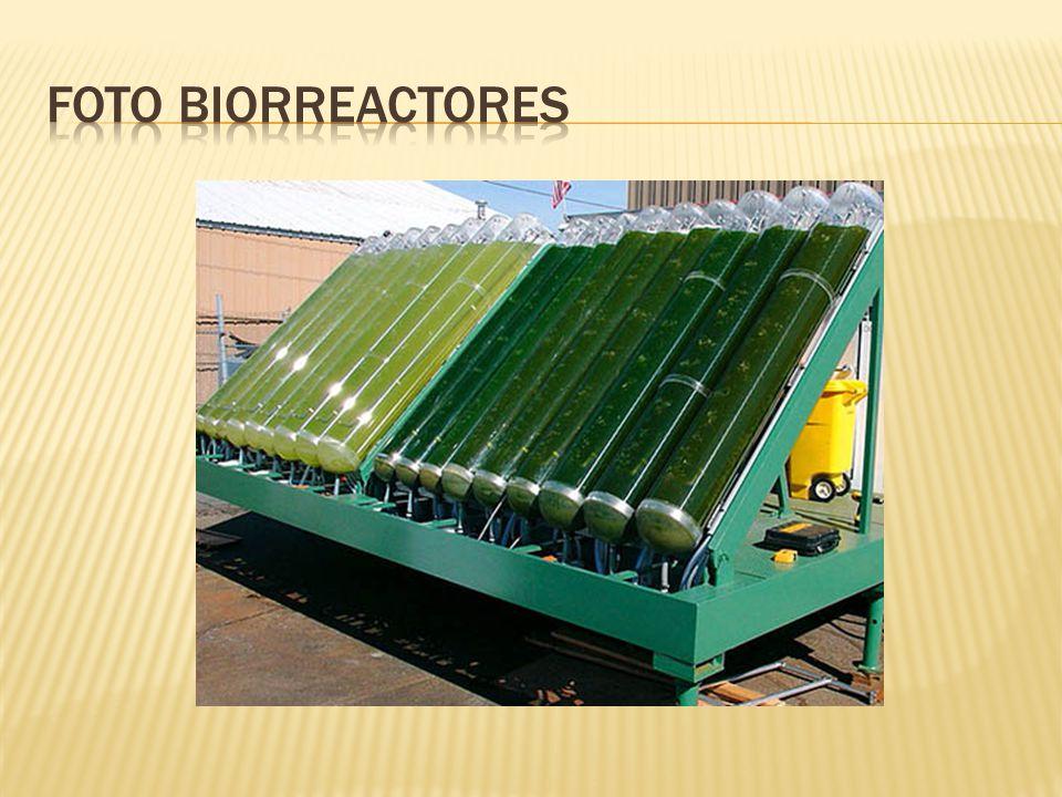 Foto biorreactores
