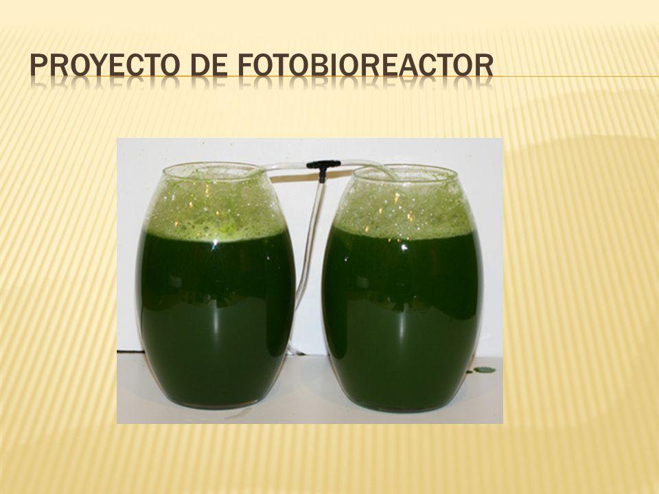 Proyecto de fotobioreactor