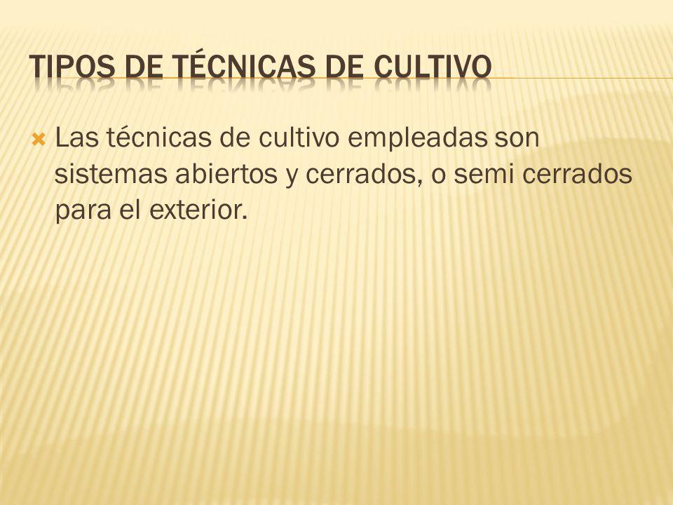Tipos de técnicas de cultivo