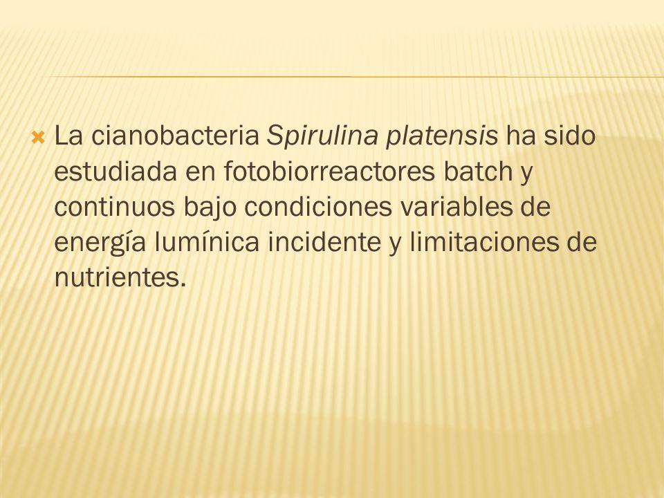 La cianobacteria Spirulina platensis ha sido estudiada en fotobiorreactores batch y continuos bajo condiciones variables de energía lumínica incidente y limitaciones de nutrientes.