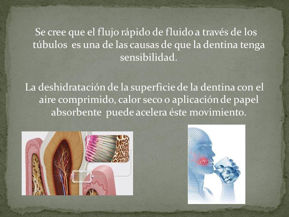 Se cree que el flujo rápido de fluido a través de los túbulos es una de las causas de que la dentina tenga sensibilidad.