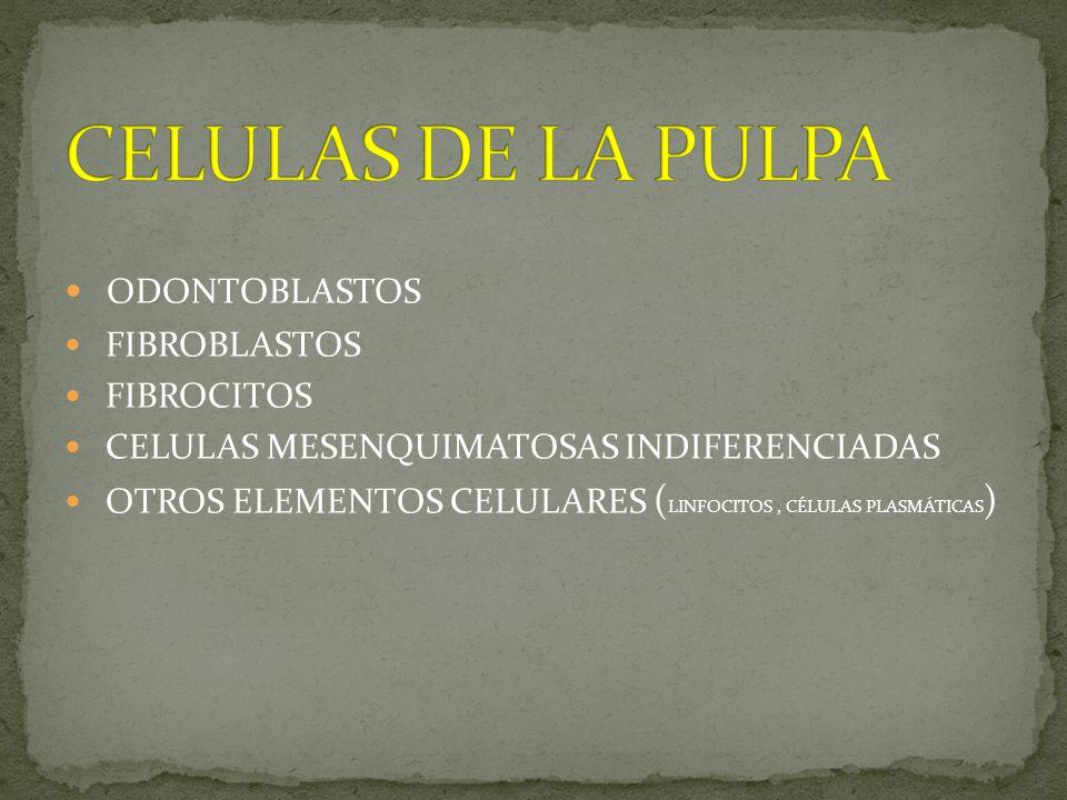 CELULAS DE LA PULPA ODONTOBLASTOS FIBROBLASTOS FIBROCITOS