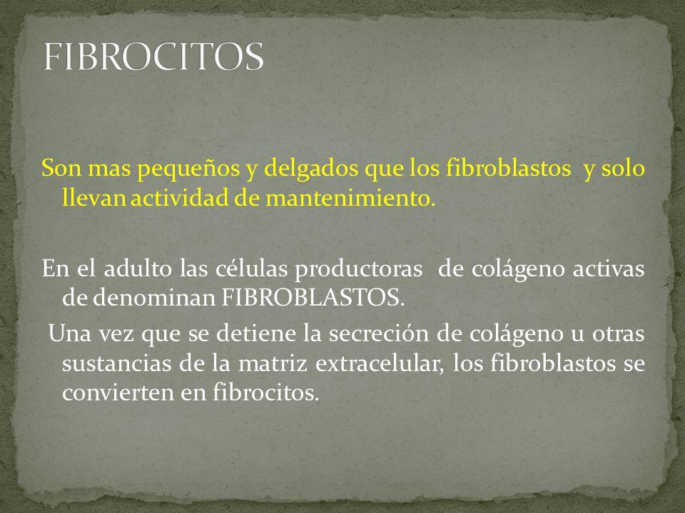 FIBROCITOS