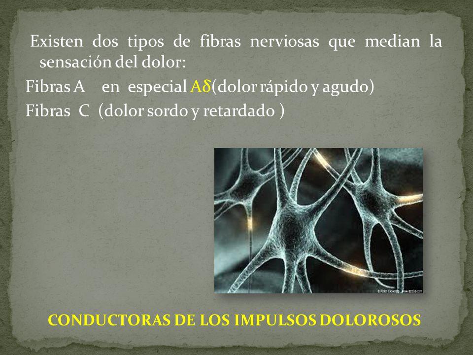 Existen dos tipos de fibras nerviosas que median la sensación del dolor: Fibras A en especial Aδ(dolor rápido y agudo) Fibras C (dolor sordo y retardado )