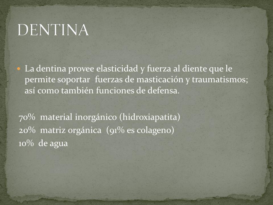 DENTINA