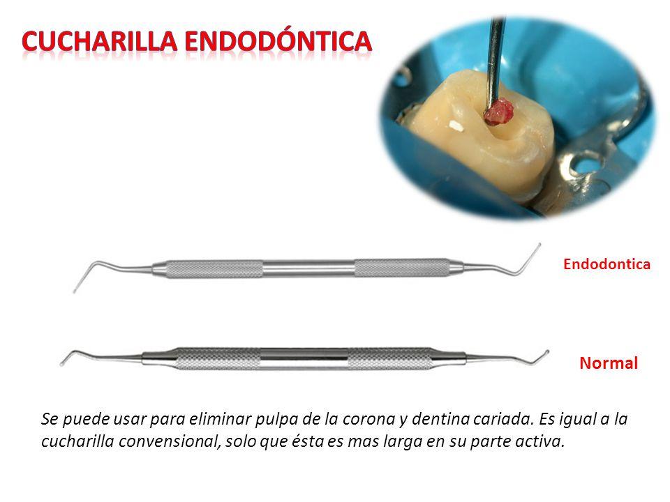 Cucharilla endodóntica