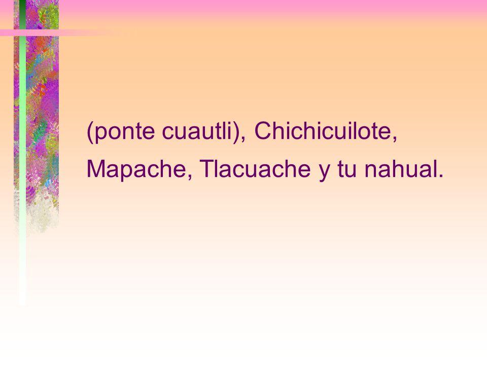(ponte cuautli), Chichicuilote, Mapache, Tlacuache y tu nahual.