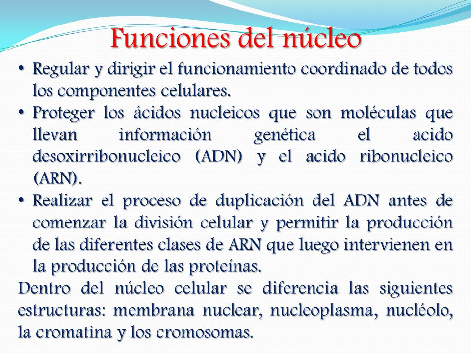 Funciones del núcleo Regular y dirigir el funcionamiento coordinado de todos los componentes celulares.