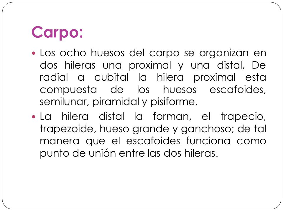 Carpo: