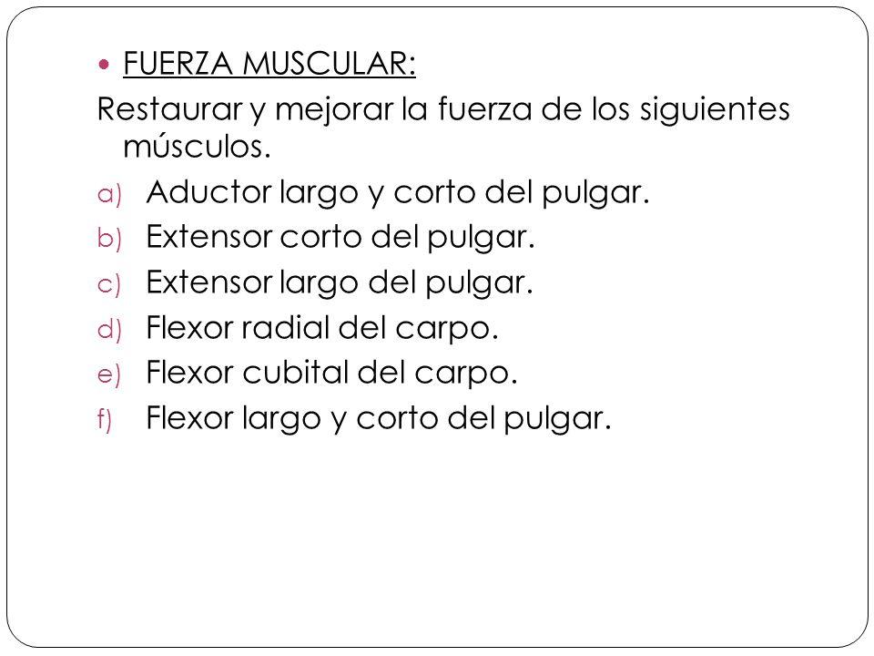 FUERZA MUSCULAR: Restaurar y mejorar la fuerza de los siguientes músculos. Aductor largo y corto del pulgar.
