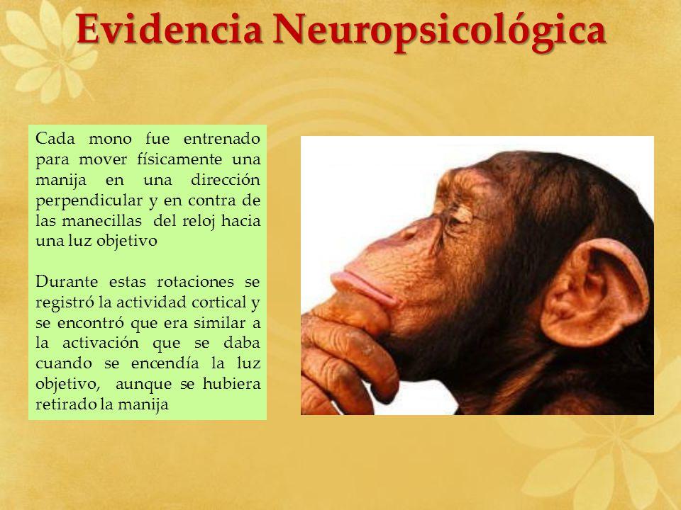 Evidencia Neuropsicológica