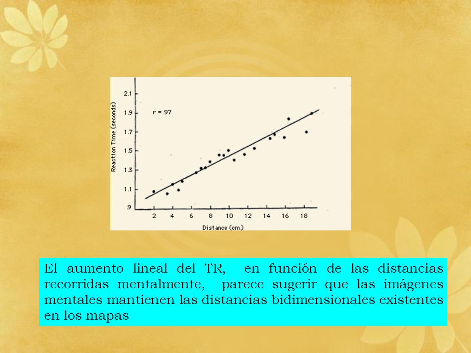 El aumento lineal del TR, en función de las distancias recorridas mentalmente, parece sugerir que las imágenes mentales mantienen las distancias bidimensionales existentes en los mapas