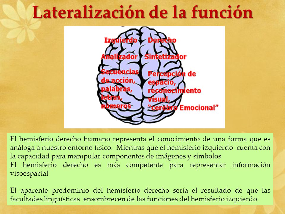 Lateralización de la función