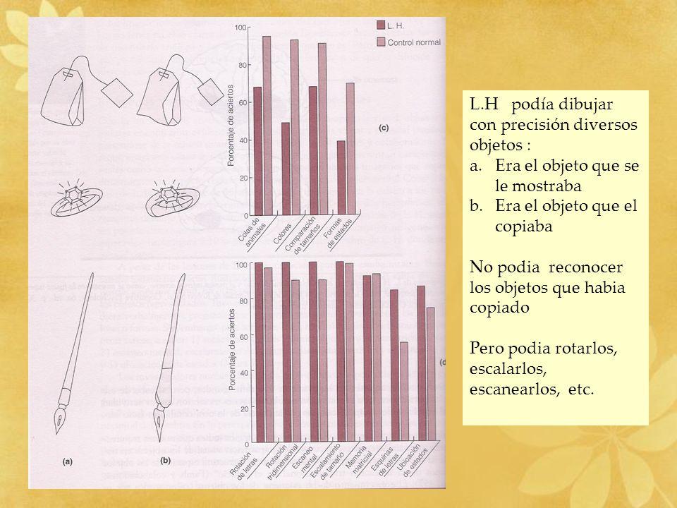 L.H podía dibujar con precisión diversos objetos :
