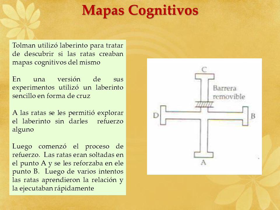 Mapas Cognitivos Tolman utilizó laberinto para tratar de descubrir si las ratas creaban mapas cognitivos del mismo.