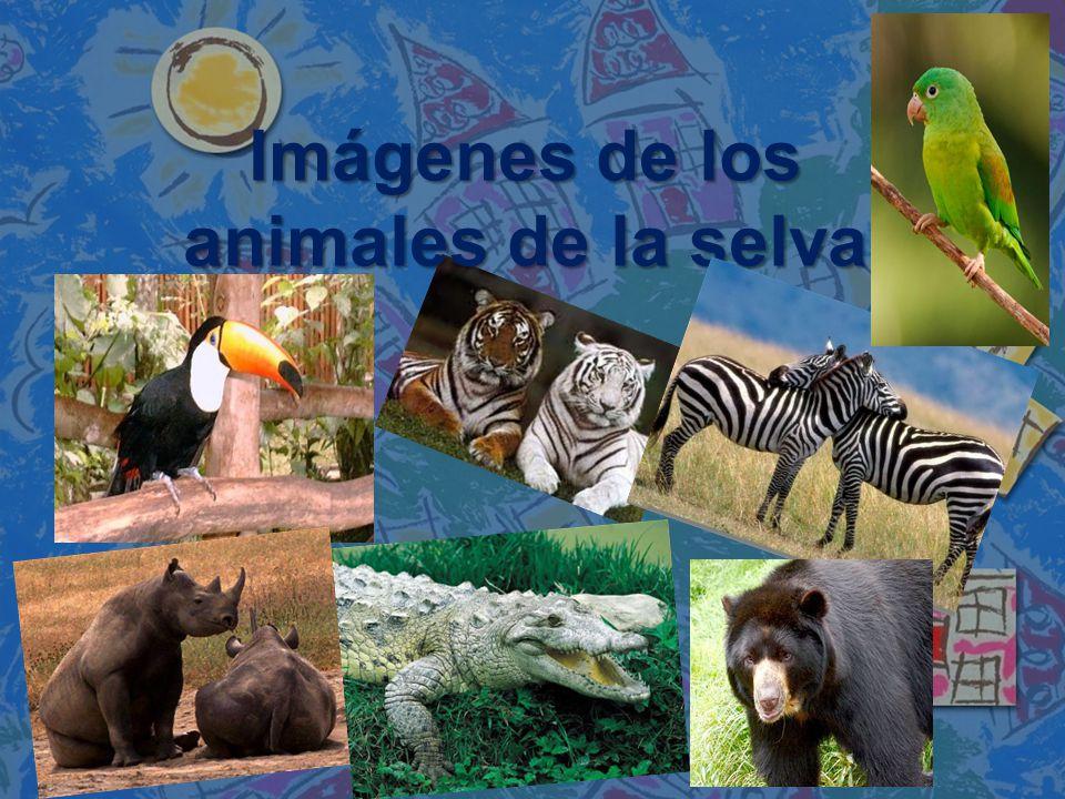 Imágenes de los animales de la selva