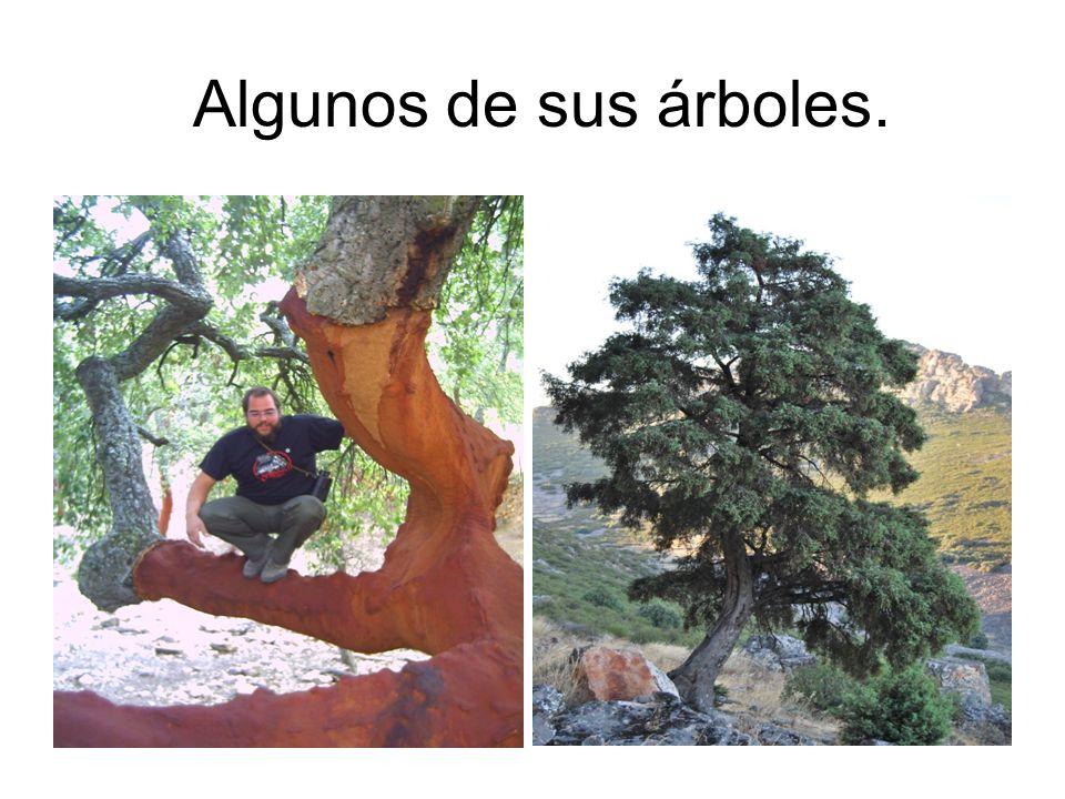 Algunos de sus árboles.