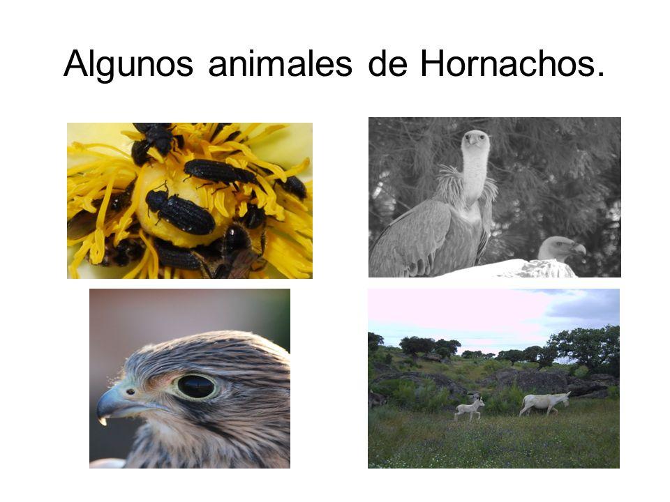 Algunos animales de Hornachos.