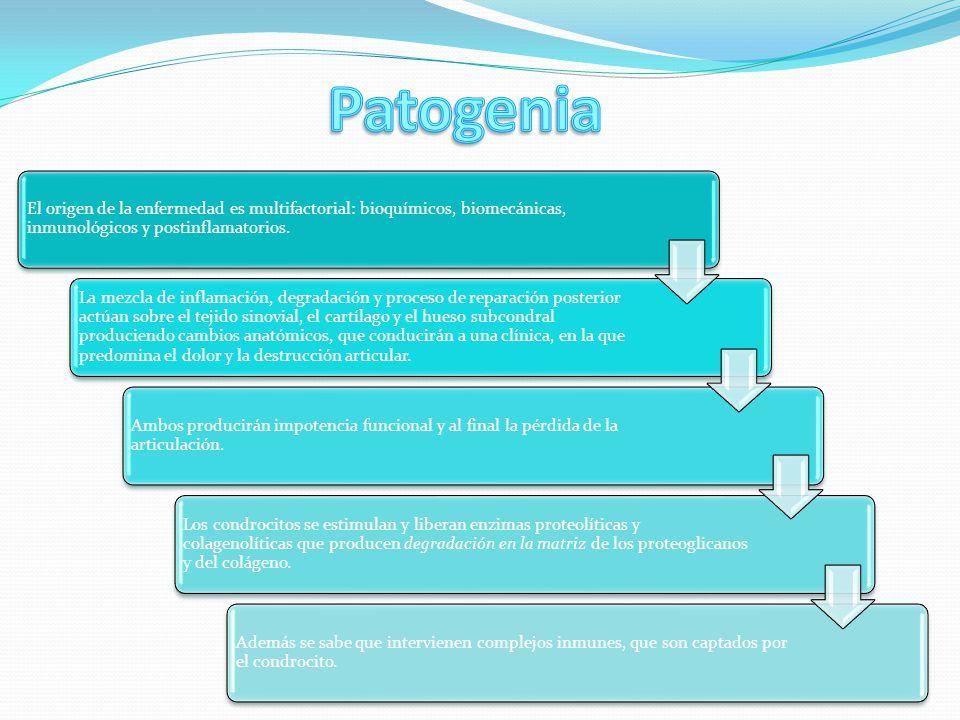 Patogenia El origen de la enfermedad es multifactorial: bioquímicos, biomecánicas, inmunológicos y postinflamatorios.