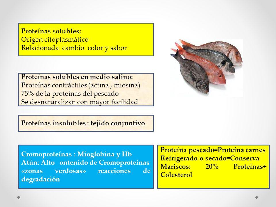 Proteínas solubles: Origen citoplasmático. Relacionada cambio color y sabor. Proteínas solubles en medio salino: