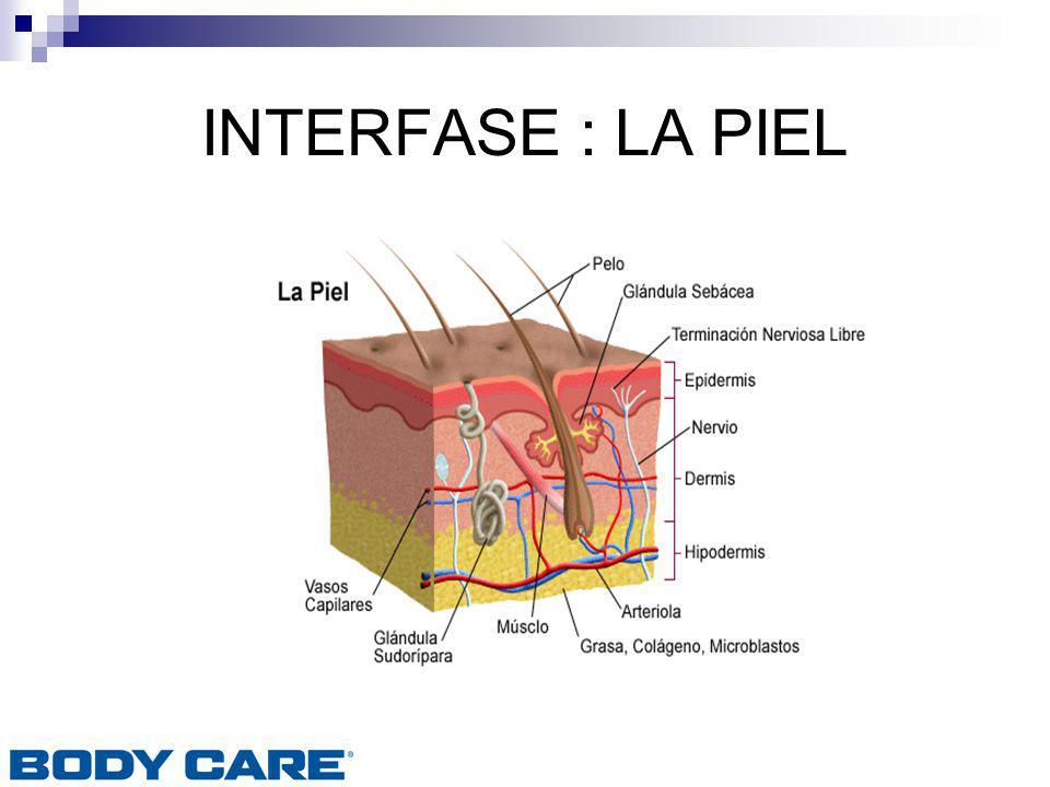 INTERFASE : LA PIEL