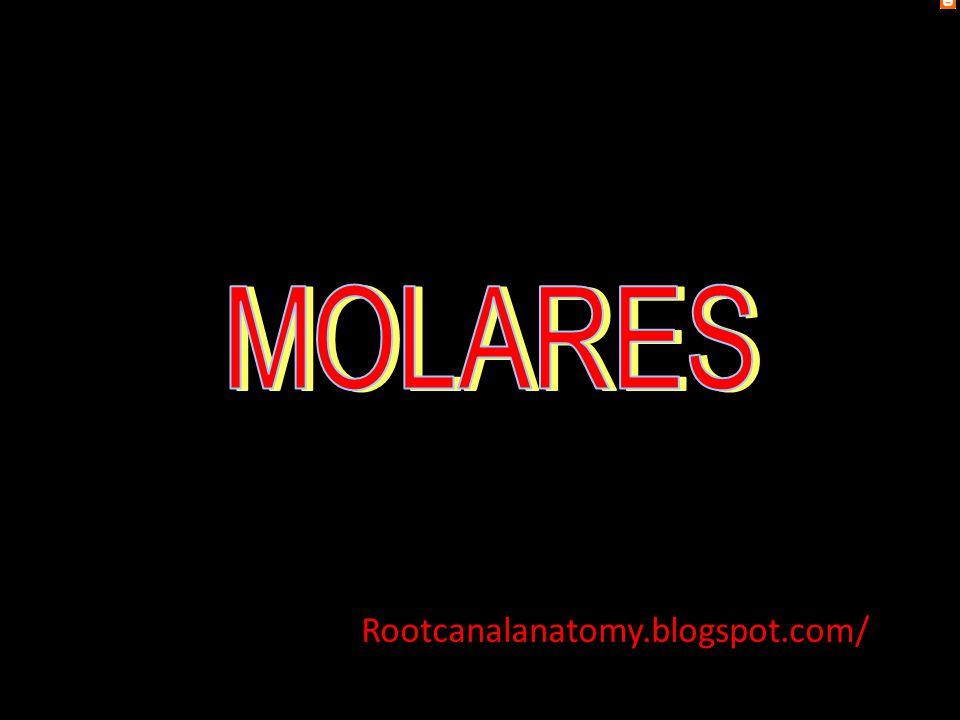 MOLARES Rootcanalanatomy.blogspot.com/