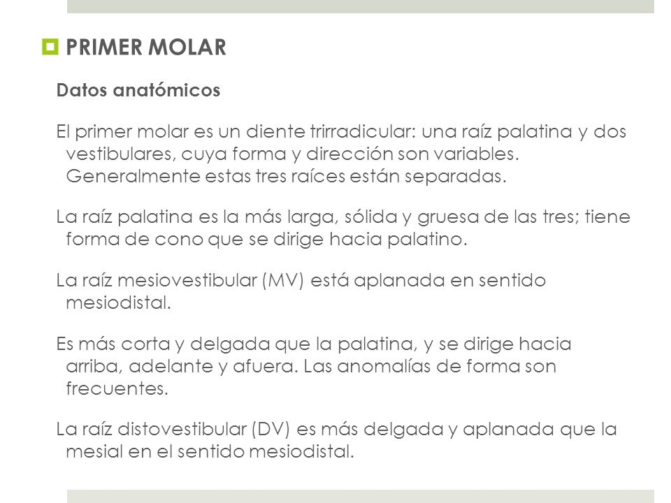 PRIMER MOLAR Datos anatómicos