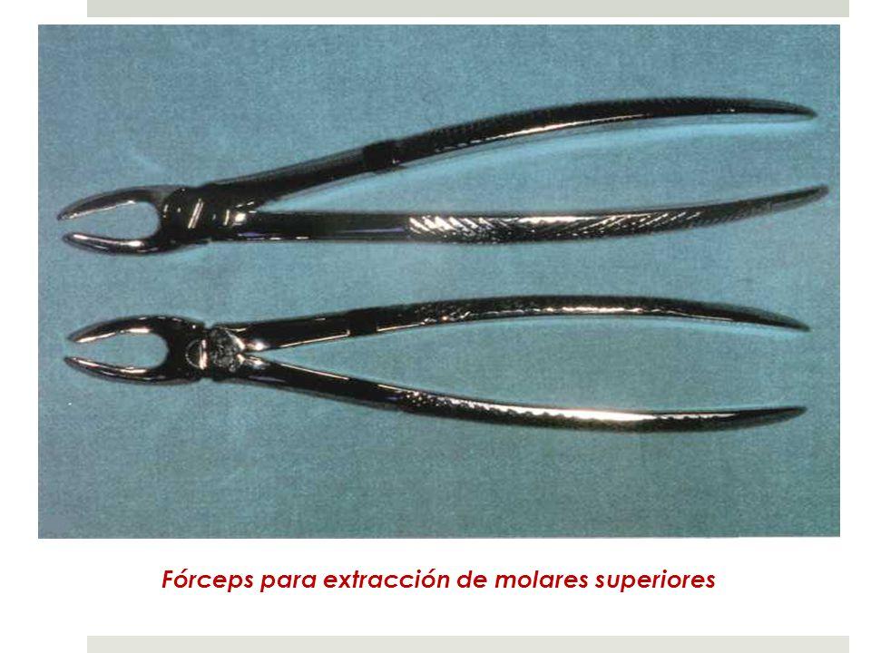 Fórceps para extracción de molares superiores