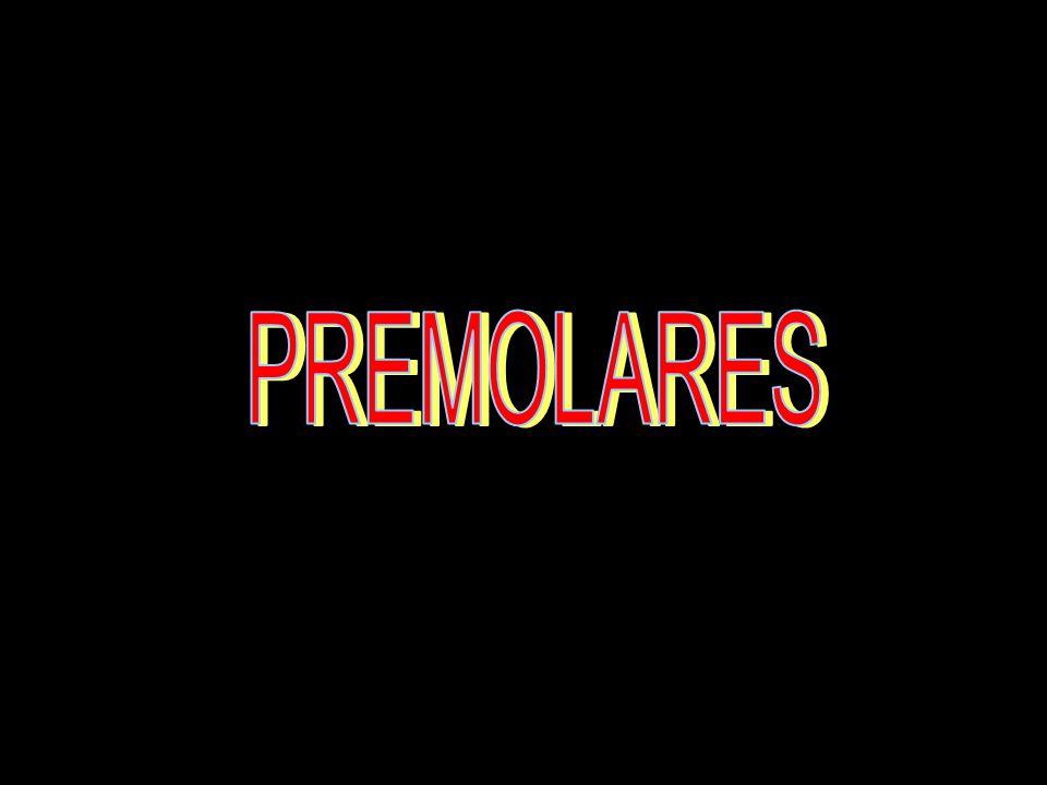 PREMOLARES