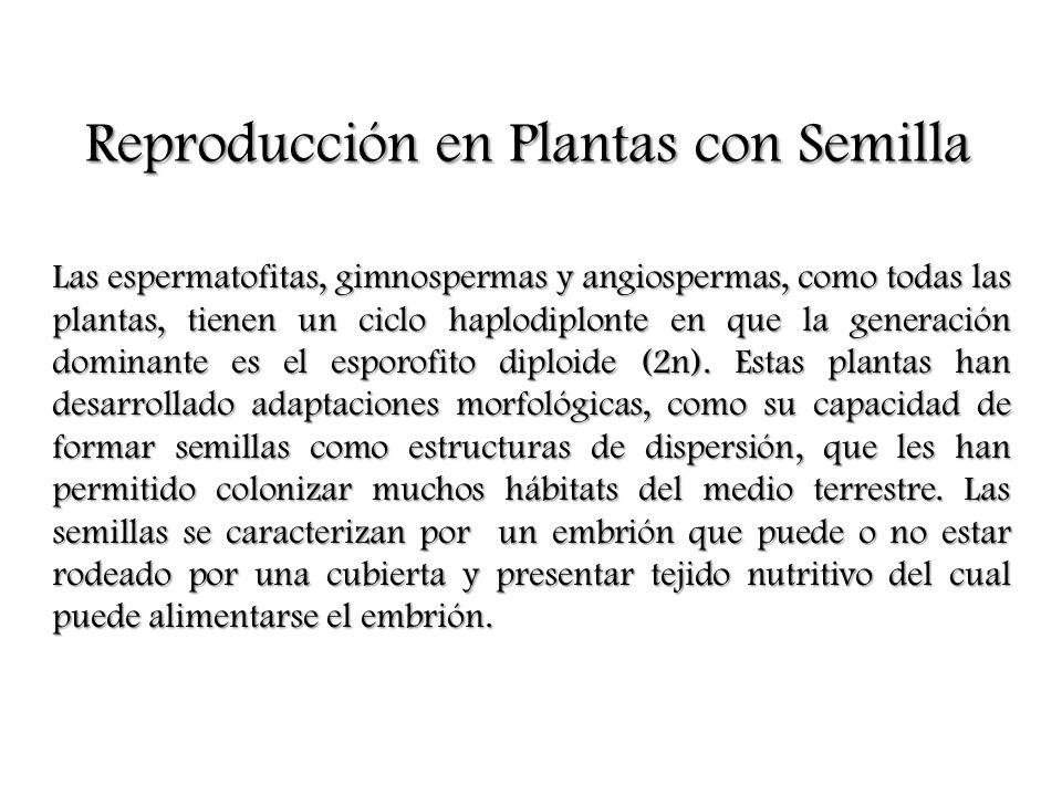 Reproducción en Plantas con Semilla