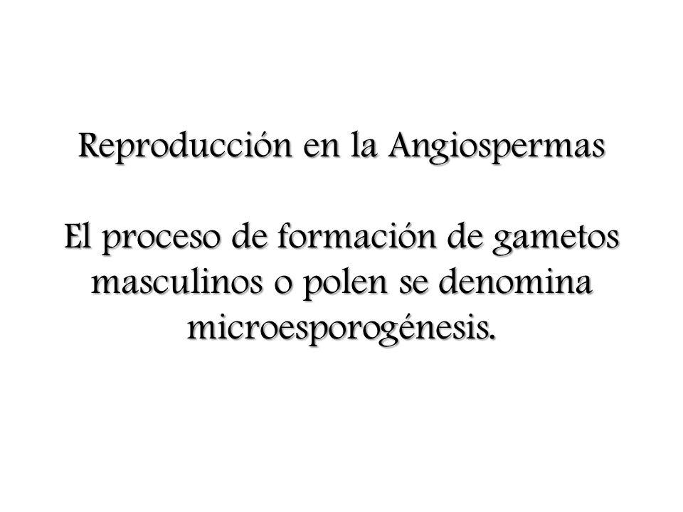 Reproducción en la Angiospermas