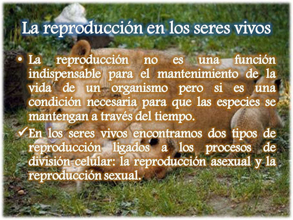 La reproducción en los seres vivos