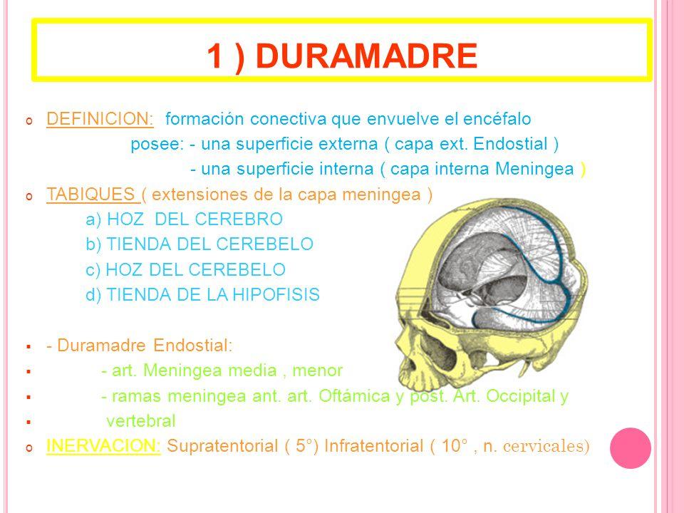 1 ) DURAMADRE DEFINICION: formación conectiva que envuelve el encéfalo