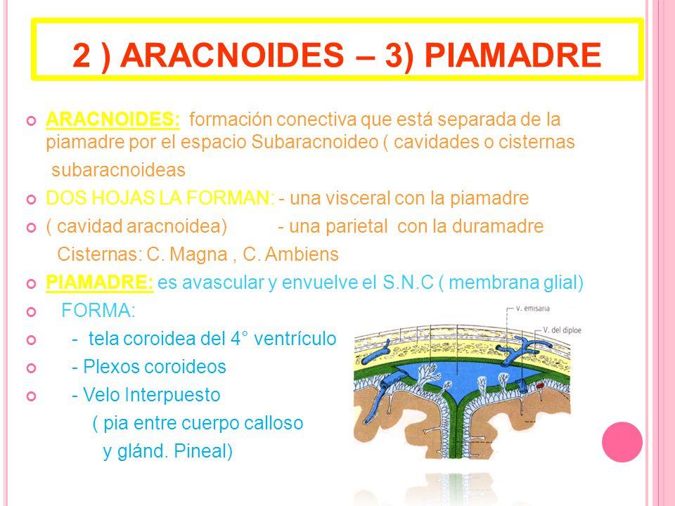 2 ) ARACNOIDES – 3) PIAMADRE
