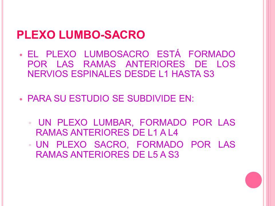 PLEXO LUMBO-SACRO El plexo lumbosacro está formado por las ramas anteriores de los nervios espinales desde L1 hasta S3.