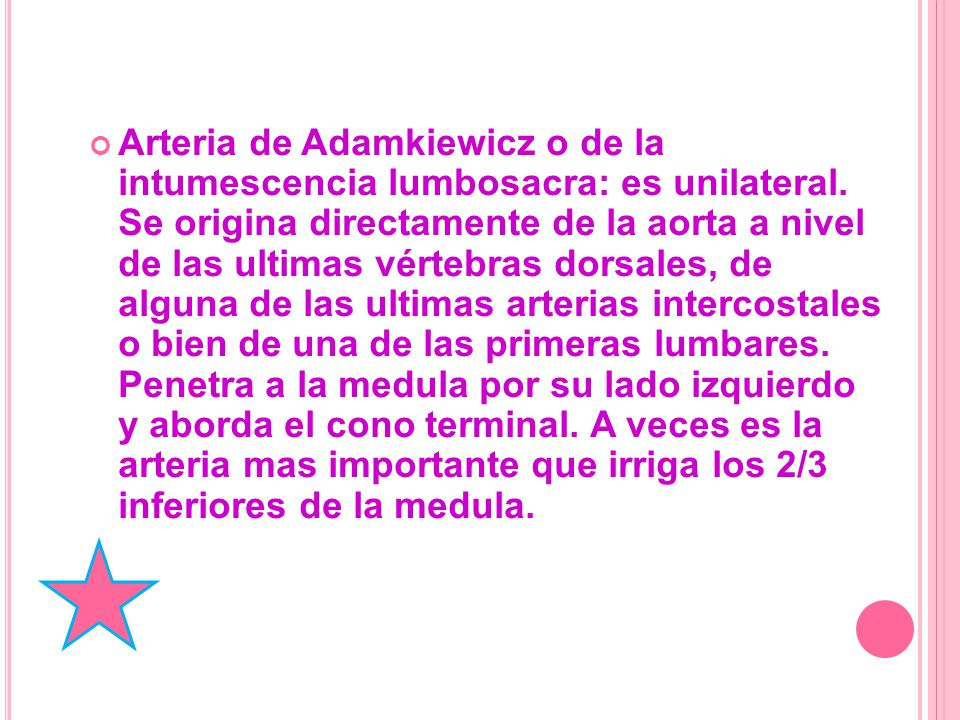 Arteria de Adamkiewicz o de la intumescencia lumbosacra: es unilateral