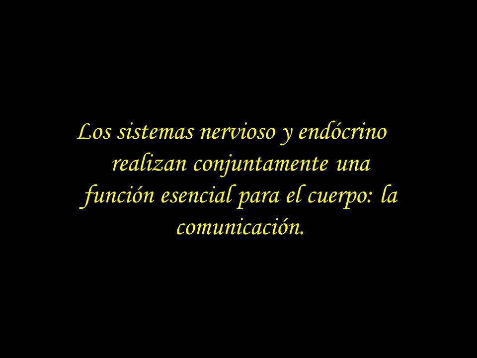 Los sistemas nervioso y endócrino realizan conjuntamente una función esencial para el cuerpo: la comunicación.