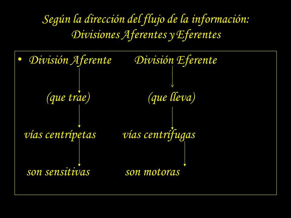 Según la dirección del flujo de la información: Divisiones Aferentes y Eferentes