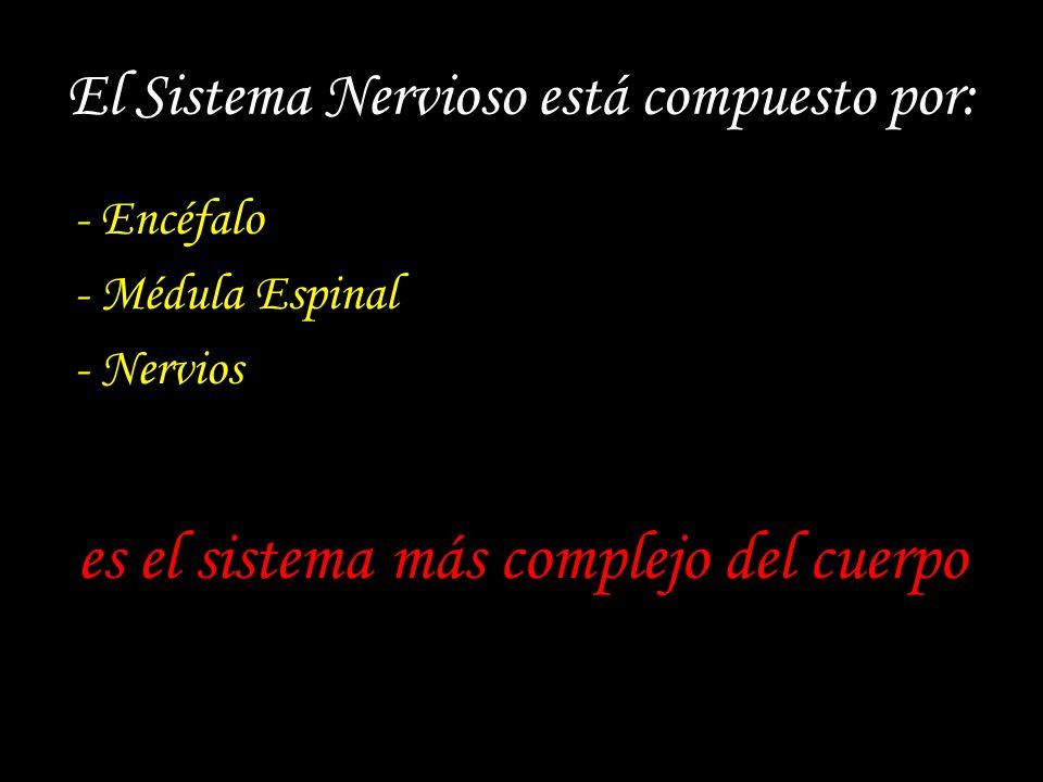 El Sistema Nervioso está compuesto por: