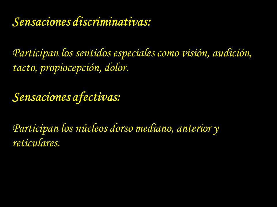 Sensaciones discriminativas: