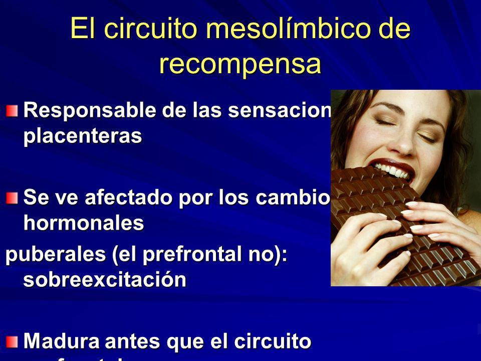 El circuito mesolímbico de recompensa