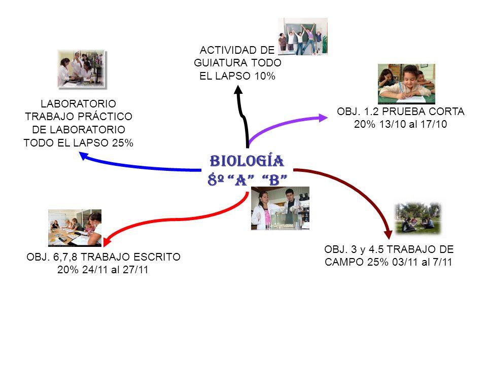 BIOLOGÍA 8º A B ACTIVIDAD DE GUIATURA TODO EL LAPSO 10%